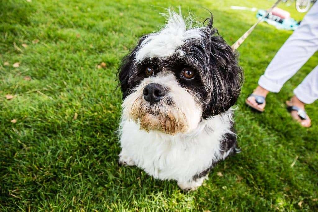 Camping met Hond - It Wiid Eernewoude