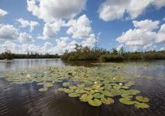 Nationaal Park 'De Alde Feanen' in het hart van Friesland